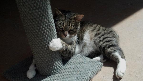 2013-02-cat