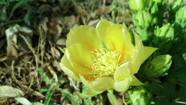 IMG_20130506_cactus