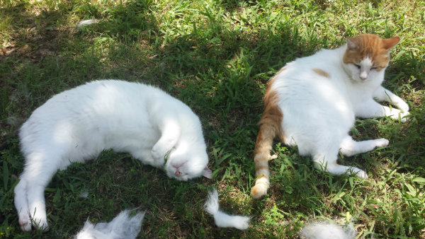 20150606_142615cats