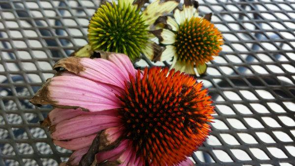 20150627_143018_flower