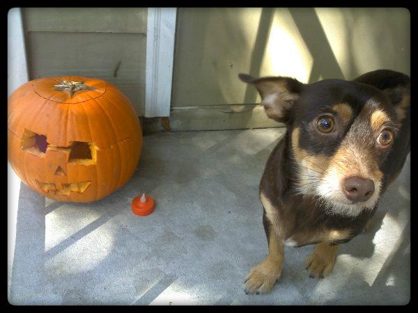 2011-10-24_12-11-16_234rock