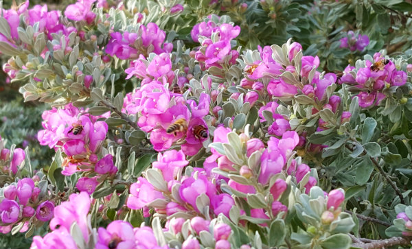20160807_080508_001bees