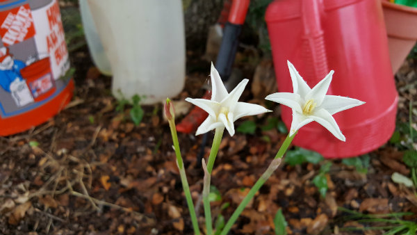 20160820_082446lily